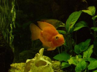 Fisk_1