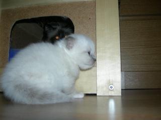 Kattunge2008_4