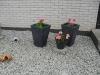 tradgarden_plantering2010-005