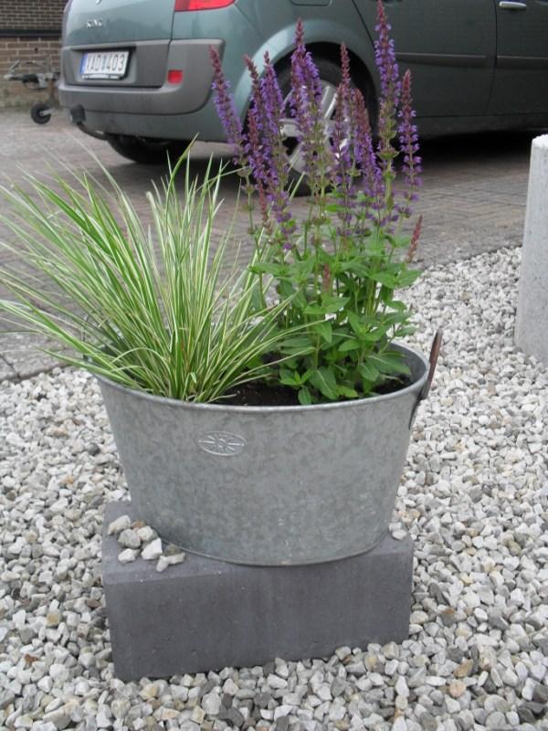 tradgarden_plantering2010-011